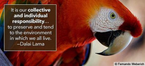 Human Rights and the Environment - Quotes - human-rights Photo