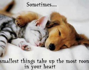 Cute Life Quotes & Sayings