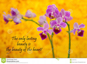 quote about life and spirit by the Persian Poet Rumi with a beautiful ...