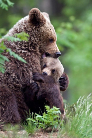 Quotes Of Love For Her Mama Bear Protecting C...