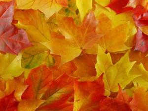 Beautiful Fall Foliage and Fall Quotes