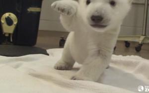 topics video cute animals polar bears zoo sustainability news