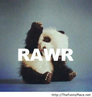 Panda wallpaper funny - Funny Pictures, Awesome Pictures, Funny Images ...