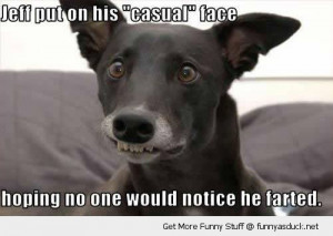 Funny Dog Faces with Captions