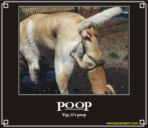 Dog checking dog poop