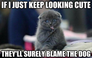funny cat pictures with captions (11)