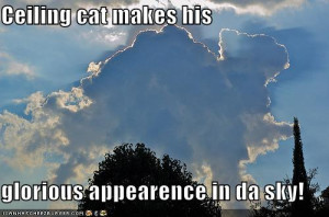 funny pictures cats wear same clothes funny pictures ceiling cat