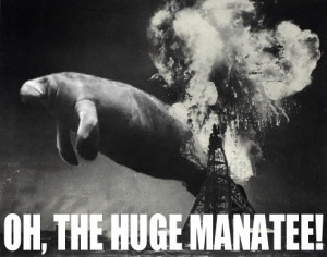 Oh, the huge manatee!