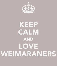 calm and love weimaraners weimaraner more weimaraner quotes weimaraner ...