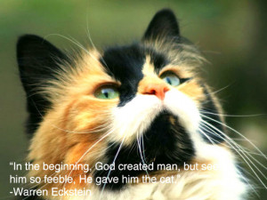 ... Pictures With Quotes: Animal Picture With Quote It Is An Angry Cat