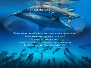 Dolphins with Quotes