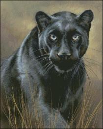 Big Cats (51)