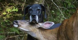dog-deer-bff-600x314.jpg