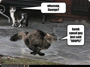 SammieDovaKin Funny Cat quotes
