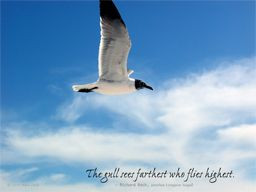 jonathan+livingston+seagull+quotes | Serenity Beach Quotes - Online ...