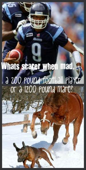 Funny Horse Quotes Mare. QuotesGram