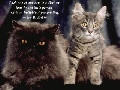 ... musical compositions. Download the free Cats & Quotes Slideshow
