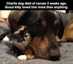 love dog animals quotes cats Friendship crying feelings cry dogs RIP ...