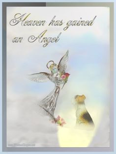 pet loss poems and quotes | Pet Loss Sympathy Cards More