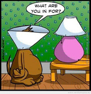 funny-picture-dog-at-the-vet-talking-to-lamp-what-are-you-in-for.jpg