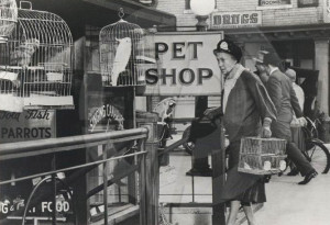 Thelma Ritter in Birdman of Alcatraz (1962)