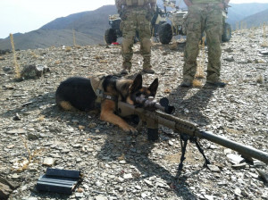 week I brought you the heart wrenching story of Military Working Dog ...