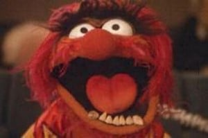 muppet_animal-1.jpg )