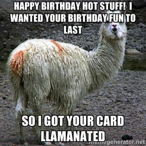 Drama llama Happy Birthday Hot