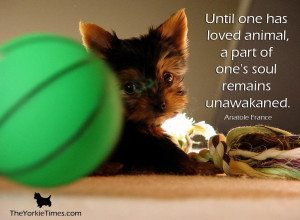 No matter how crazy they may drive you when they bark incessantly and ...