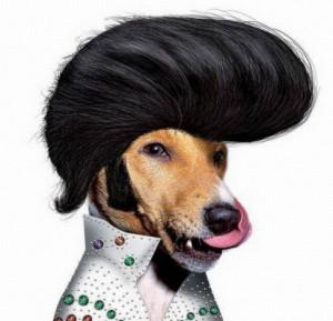 Elvis Presley Reborn As a Dog