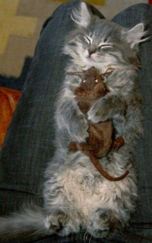Hugging In My Sleep Cat - Return to Funny Animal Pictures Home Page