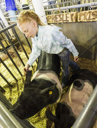 Taylor Bales, a member of the Palisade 4-H Club, cleans the ears of ...