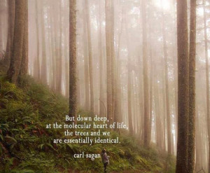 Carl Sagan Quote on Trees - Photo of the Day
