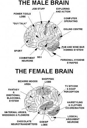 Differences Between Male's & Female's Brain