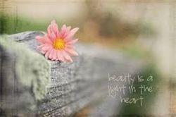Flower quotes - blog page Launceston West Tamar Flowers