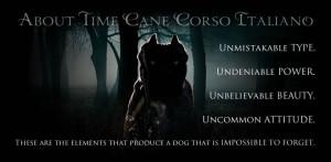 ... Cane Corso Italiano. ~*~ About Time Cane Corso is also on Facebook