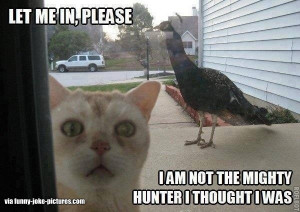 Funny Cat Peacock Joke Picture - Let me in, please. I am not the ...