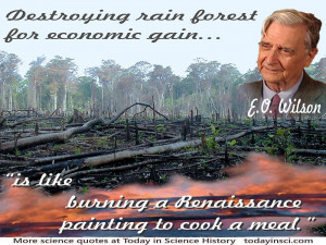 ... deforestation photo+quote Destroying rain forest for economic