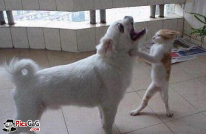 Bitten By Cat Funny Dog