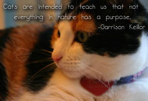 Cat Quotes and Sayings