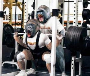 Gorilla Funny Quotes Gorilla training