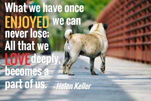 Dog Quotes Dog Loss Quotes Sayings Dog Death Quotes Sympathy Dog Loss