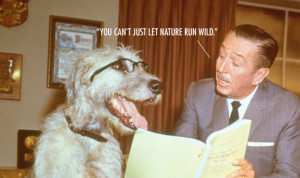 Walt Disney Quotes That Are Actually Fake | RGS Computing