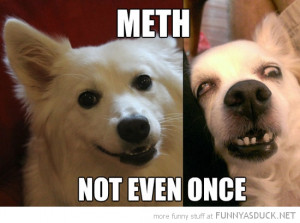 meth not even once dog animal ugly funny pics pictures pic picture ...