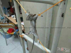 funny-mouse-trap