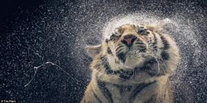 صور حيوانات رائعة