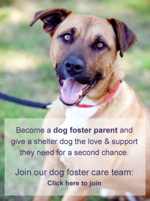 Dog foster care with Animal Welfare League NSW. Can you help?Animal ...