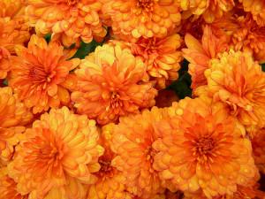 pumpkin colour