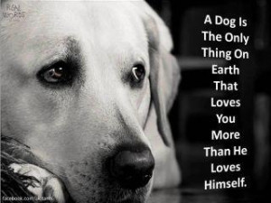 Dog Quotes Love Loyalty Dog