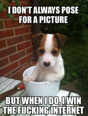 Dog Memes   We Love All Dogs